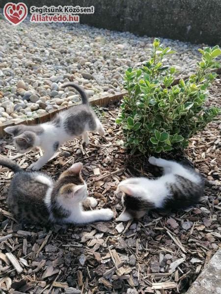 3 kiscica gazdát keres