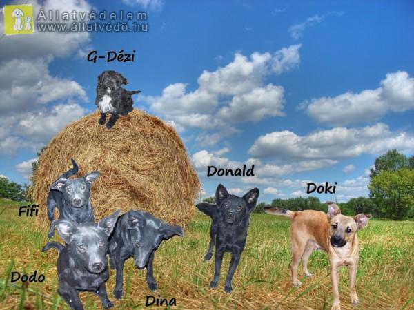 Doki, Donald, Dézi, Fifi, Dodo, Dina