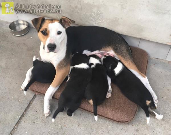 Kölyök kutyák