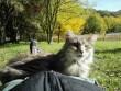 Talált cica