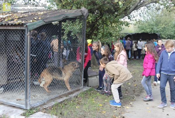 Gyerekek látogatták meg a mentett kutyusokat