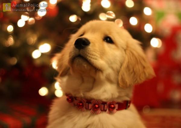 Karácsonyra ÁLLATSTOP!