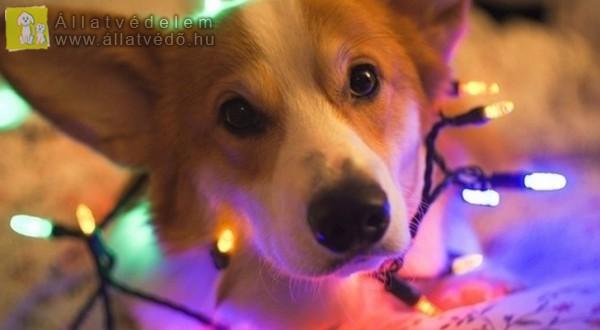 Karácsonyra se élő állatot...