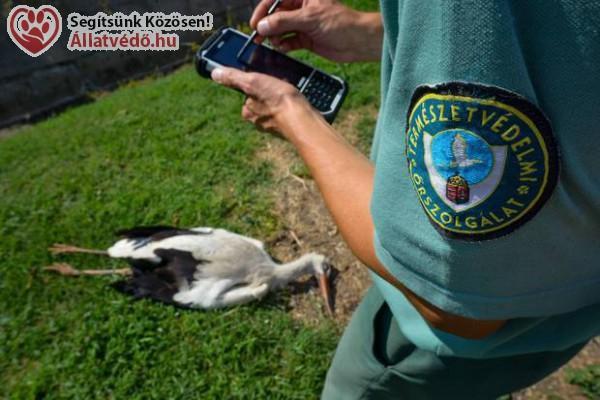 Egy nap alatt 4 gólya halt meg ugyanott