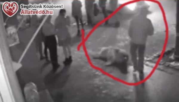 Videón, ahogy utcán vonszol egy kutyát a brutális váci állatkínzó