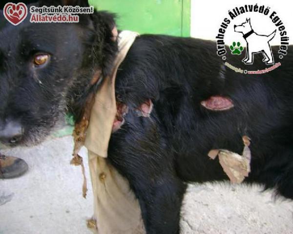 Felelős állattartás karantén idején is