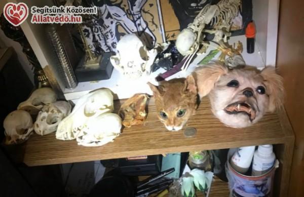 Állatfejek, kitömött állatok, foszladozó állattetemek