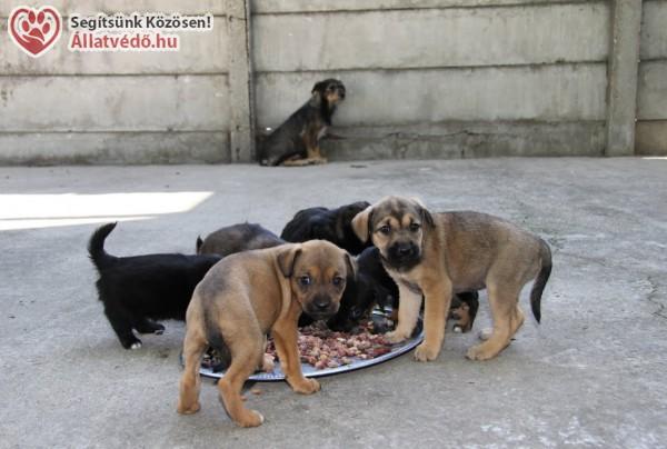 Állatok Világnapja október 4. - Állatvédelem: van feladat bőven