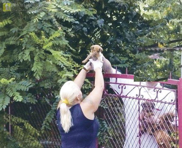 Padlásról dobálta ki a kiskutyákat a zavarodott férfi