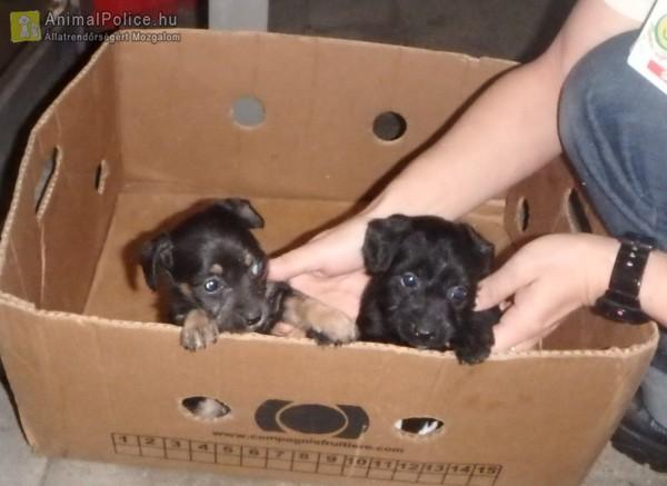 Kidobták a bolt elé szegény kiskutyákat