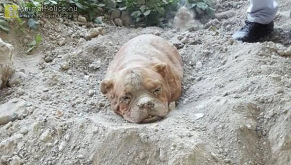 Élve temette el kutyáját egy férfi - ez normális?!