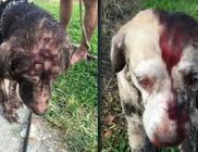 Brutális: kalapáccsal próbálta meg agyonverni a 2 kutyát a férfi