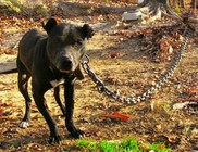2016-tól pénzbírságra számíthat, aki láncra köti ki a kutyáját