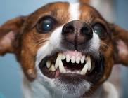 A láncon tartott kutya időzített bomba