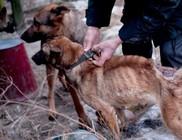 Kecskeméti kutyapokol, megrázó fotók