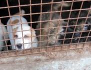 Száznál több kutya szenvedett a szaporító telepen