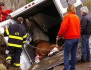 A lószállító jármű és a ló védelmében