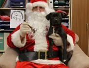 Ne ajánékozzunk élő állatot karácsonyra - videóval
