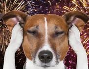 TűzijátékSTOP! - házi kedvenceink petárda balesetei
