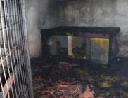 Legalább 60 kutya pusztult el az állatmenhelyen keletkezett tűzben