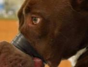 Öt év börtönt kapott a kutyája pofáját leragasztó állatkínzó