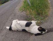 Elgázolt kutya az út szélén