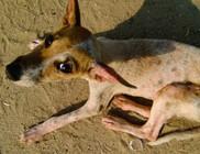 Elvágta a kutya nyakát, elítélték