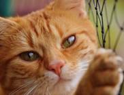 Macskanyúzókat fogtak Óbudán