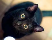 Hagyjátok a fekete macskákat!