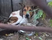 Állatvédelem, állatjólét