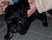 Villamosról dobták le a kiskutyát