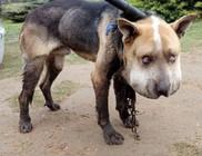 4 hónap börtönt ért a kutyakínzás
