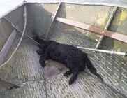 Folyóba fulladt a kutya, de hogy került oda?
