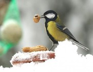 Életmentő a madáretetés hóesésben