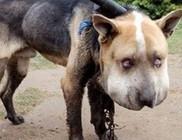 8 hónap letöltendő börtön a kegyetlen kutyakínzásért