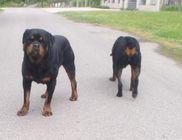 Sokszor kerülnek utcára kutyák a gazdák figyelmetlensége miatt