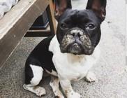 Állatvédelem: kutyarablás váltságdíjjal