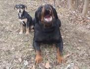 A láncon való kutyatartás időzített bomba