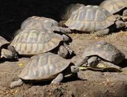 Állatkerti állatkínzás - teknőst ütött agyon kockakővel