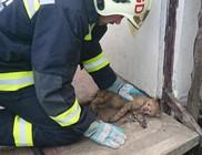 Égő házból mentett cica