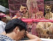 Kutyaevők: évente több tízmillió kutyát esznek meg