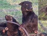 Orvvadászat = állatkínzás = bűncselekmény