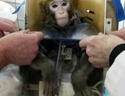 A világjárvány sok ezer kísérleti állat életét is követeli - leölik őket, mert leálltak a kutatások