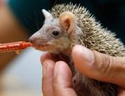 Túlélés emberi beavatkozással - magára hagyott állatkölykök etetése