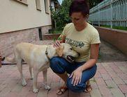Kegyetlenül ivartalanították az elkóborolt kutyát