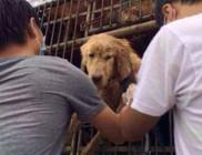 Kínában nagyüzemben tolja a kutyamaffia