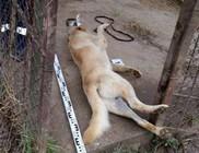 Brutális kutyagyilkosság: felakasztva talált kutyájára a gazda