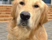 Megmérgezték Rustyt, a hűséges vakvezető kutyát