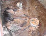 Brutális körülmények között voltak tartva a kutyák, volt amelyik el is pusztult