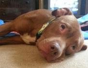 Horror - A család kutyája ölte meg a 6 hónapos kislányt